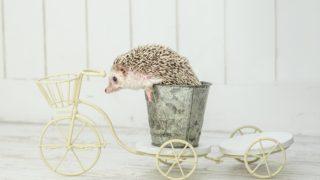 徹底調査!中古の子供乗せ電動自転車は失敗する可能性大【安く乗るには】
